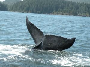 whale tale-millard